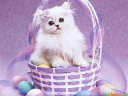 free easter cat wallpaper name cuteimages net