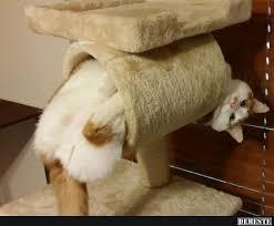 s e katzen spr che besten bilder und sprüche und es kommen täglich neue