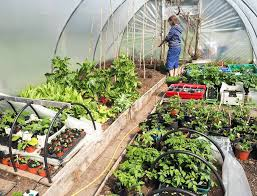 the polytunnel book fruit and vegetables all year round home