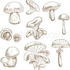 autumnal forest edible boletus and porcini chanterelle and