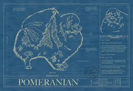 pomeranian animal blueprint company pomeranian dog blueprint