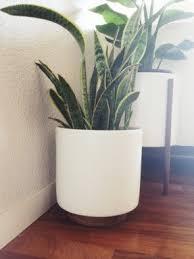 large indoor planters foter