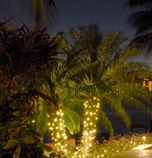 Outdoor Up Lighting For Trees String Up Some Class String Lighting For Your Wilmington Palm