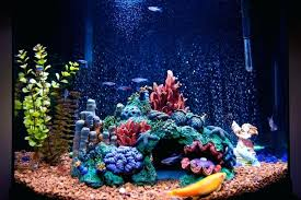 saltwater aquarium decor lighting for a which system is best your