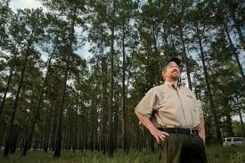 Texas forest images Texas forestry industry is standing solid farm flavor jpg