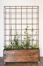 Plants And Planters by Best 20 Indoor Planters Ideas On Pinterest U2014no Signup Required