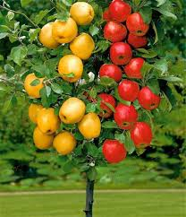 Planting Fruit Trees In Backyard Online Buy Wholesale Backyard Fruit Trees From China Backyard