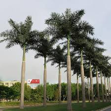 designed 3 30m artificial royal coco palm tree for outdoor gardening