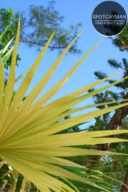 Grand Cayman Islands Map 66 Best Cayman Brac Images On Pinterest Cayman Islands Grand