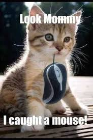 Dat Ass Cat Meme - funny cat memes creepy cat meme quickmeme cats pinterest