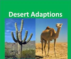 desert plants and animals adaptations for kids youtube