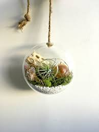 circle glass vase wall hanging terrarium with air plant