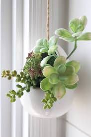 Home Plant Decor by How To Make Mini Succulent Arrangements Home Decor Gardens