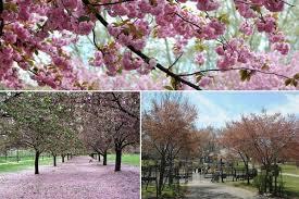 Botanic Garden Bronx by Home Decor Astounding Botanical Garden Brooklyn Brooklyn