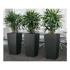 planters for plants descargas mundiales com
