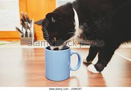cat drinking milk cup stock photos u0026 cat drinking milk