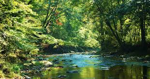 fairhill native plants fly fishing the rivers of the chesapeake find your chesapeake