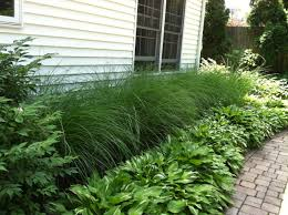 Basic Backyard Landscaping Ideas by Easy Landscaping For The Lazy Gardener Ornamental Grass And Hosta
