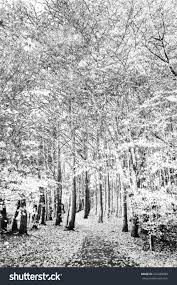 digital pencil sketch photograph pathway through stock