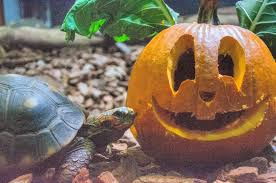 animals halloween liberty science center the animals at lsc are getting into the