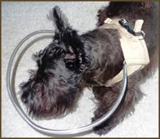Pictures Of Blind Dogs About Our Dog Head Protection Product Blind Dog Halo Vest
