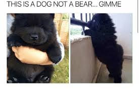 this is a dog not a bear gimme bear meme on me me