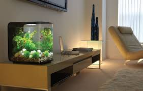 cuisine fish tank ideas largesize natural soft brown wall paint