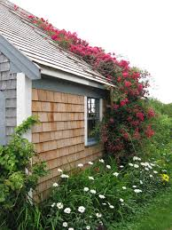 native plants of arkansas cape cod historic homes blog gardening with native plants to
