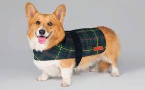 queen u0027s corgis earn their keep as dog gifts boost royal takings