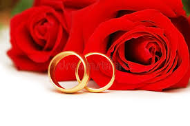 red rose rings images Two wedding rings and red rose stock image image of events jpg