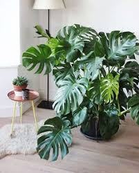 Indoor Plants That Don T Need Sun 10 Plants That Don U0027t Need Sunlight To Grow Sunlight Backyard