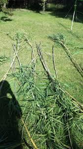 taylor and marty u0027s bamboo cucumber trellis u2022 helpfulgardener com