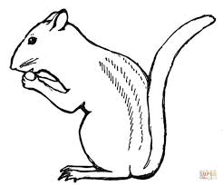 chipmunks coloring pages free coloring pages