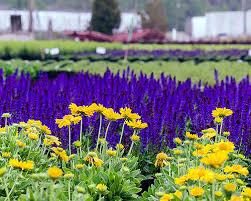 Flower Shops In Suffolk Va - lancaster farms wholesale nursery