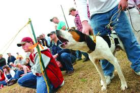bluetick vs english coonhound magnificent 7 the dogs of the grand american news thetandd com