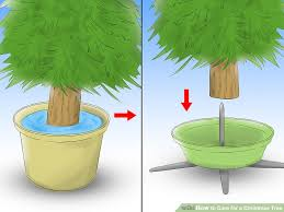 Never Decorate A Palm Tree For Christmas by How To Care For A Christmas Tree 12 Steps With Pictures