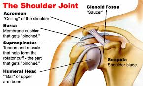 Tendons In The Shoulder Diagram Ukc Articles Climbing Shoulder Injuries Exercises And Tips