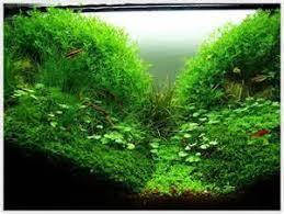 Small Tank Aquascaping Small Tank Aquascaping Your Aquarium Aquascaping Design For