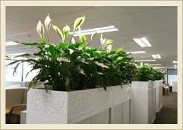 plants for office indoor plants design and installation interior plants dubai