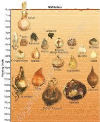 Garden Express Summer Catalogue - bulb identification u0026 planting depth guide garden express