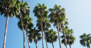 top 5 secrets for keeping your florida palm tree healthy
