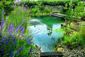 Natural Pools by Biotop Natural Pools 29 With Biotop Natural Pools Home