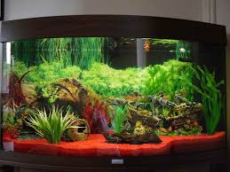 how to build aquarium decoration themes cool modern aquarium