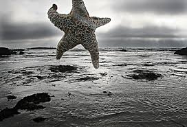 Starfish Meme - starfish were meant to fly know your meme