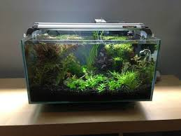 fluval edge 6g taking the top the planted tank forum