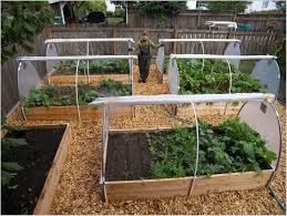 fall raised bed vegetable gardening for beginners planting in a