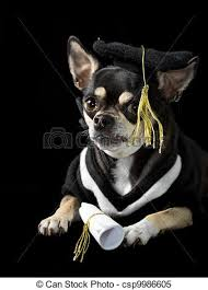dog graduation cap and gown graduation dog chihuahua in cap and gown for stock images