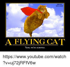 Flying Cat Meme - angry kitty needs a laughill a flying cat yeah we re screwy ed