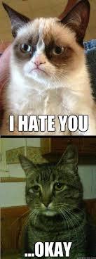 Drunk Cat Meme - best of the depressed cat meme smosh