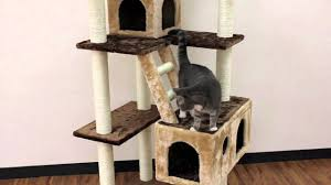 beverly hills cat tree youtube